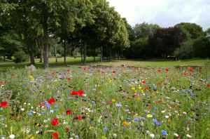 beautiful environment field flora